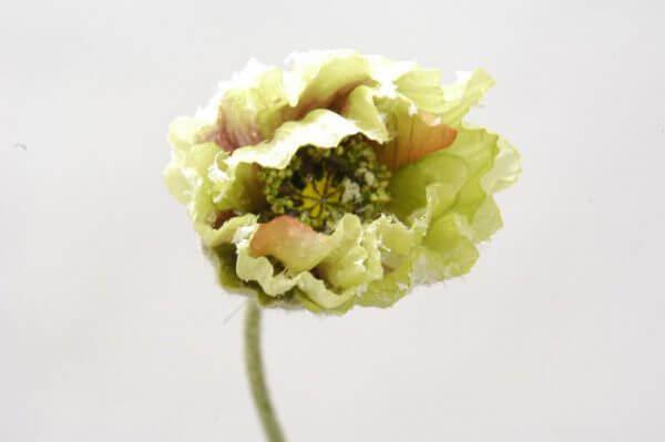 Klaproos groen 43cm