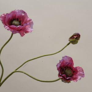 Klaproos roze 45cm