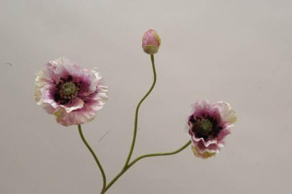 Klaproos wit roze 45cm