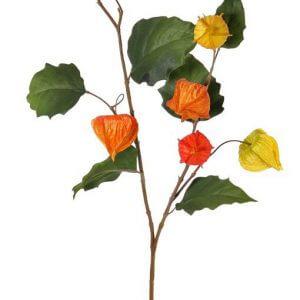 Lampiontak oranje met blad