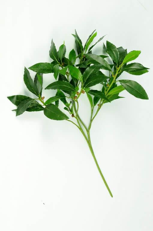 Laurierblad 55cm