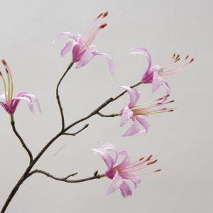 Lily Spider licht roze 45cm