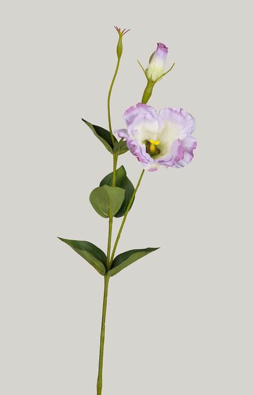 Lisianthus lila 40 cm