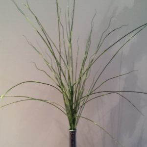Long grass spray 100 cm