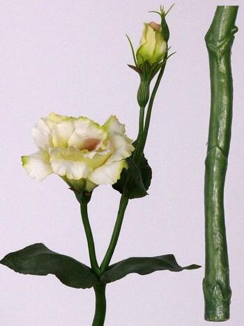 Lysianthus creme 40cm
