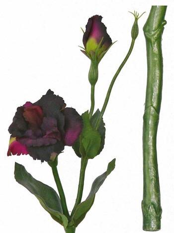 Lysianthus dk paars 40cm
