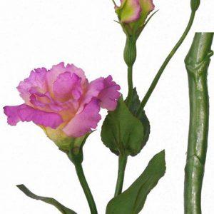 Lysianthus roze 40cm