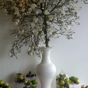 Magnoliaboom