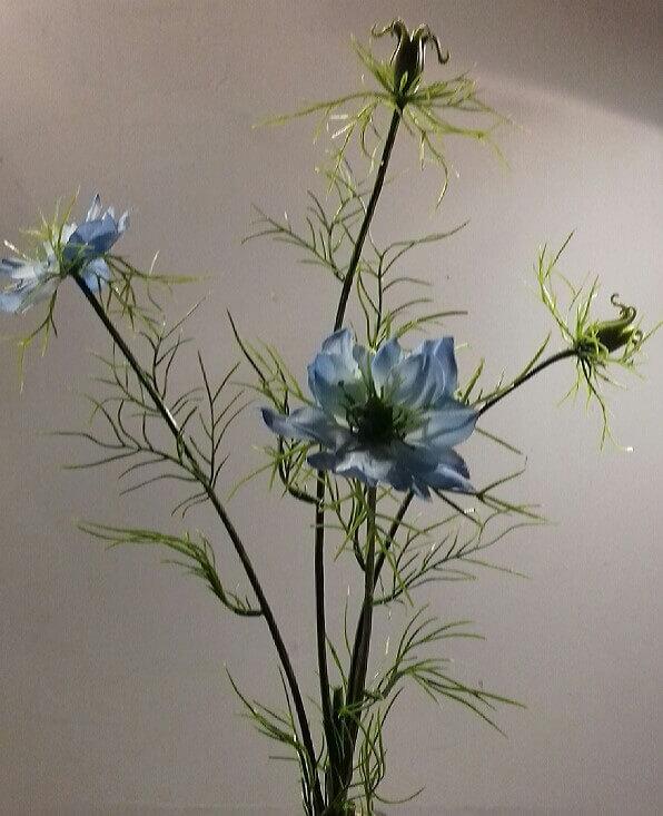 Nigella blue 66 cm