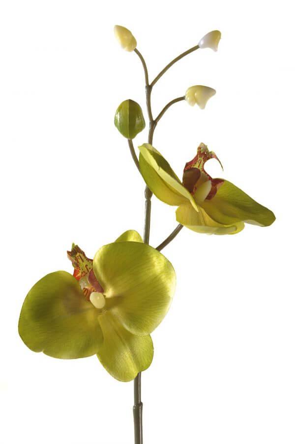 Orchidee Steker Groen 27 cm