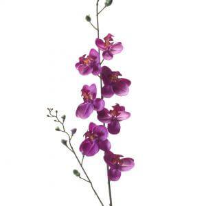 Orchidee fuchsia 75cm
