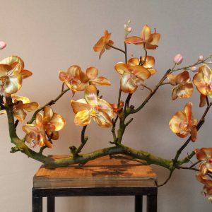 Orchidee op hout