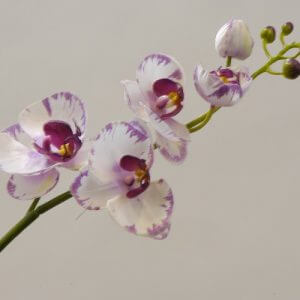 Orchidee wit paars 40cm