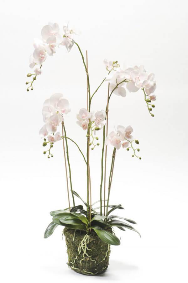 Orchideeplant 130 cm