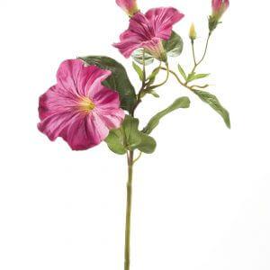 Petunia fuchsia 35cm