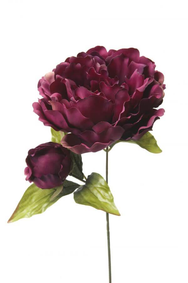 Pioenroos donker paars 35cm