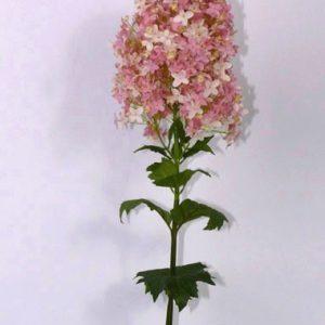 Pluimhortensia Roze 100cm