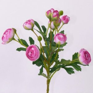 Ranonkel bundel roze 55cm