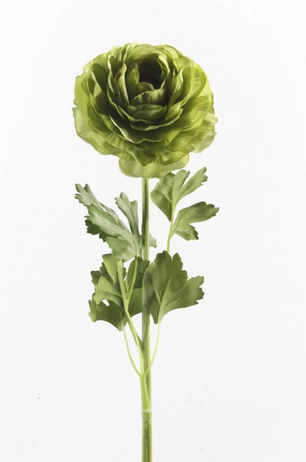 Ranonkel groen 60cm