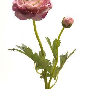 Ranonkel roze 48cm