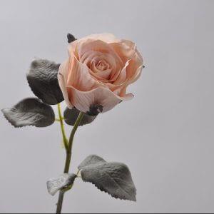 Roos Beige 43cm