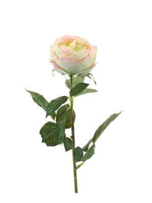 Roos Chantal groen-roze 70 cm