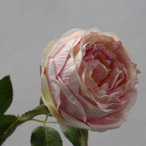 Roos Groot licht roze 65cm
