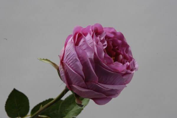 Roos Groot roze 65cm