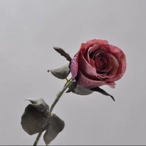 Roos Lavend 43cm