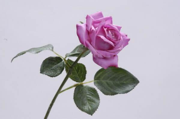 Roos Open fuchsia 35cm
