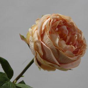 Roos Peach 65cm