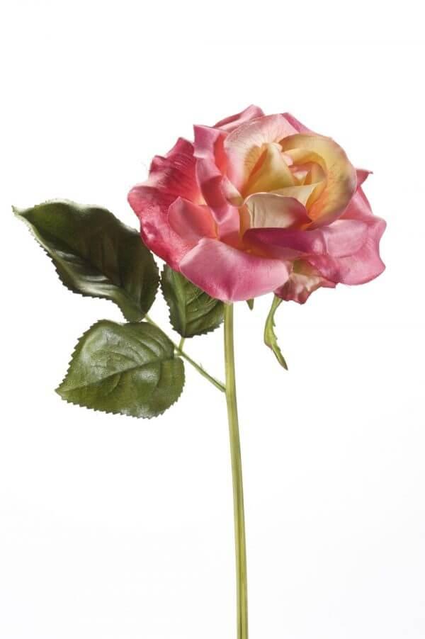 Roos Steker roze-geel 28cm