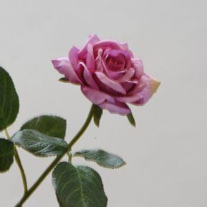 Roos Stem fuchsia 35cm