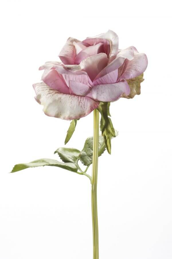 Roos licht mauve 28cm