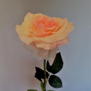 Roos roze perzik