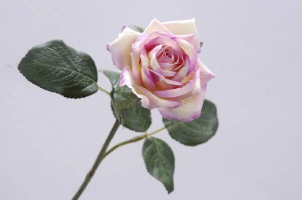 Roos roze wit 35cm