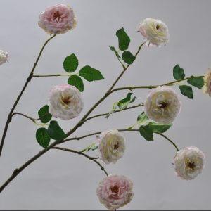 Roos tak creme roze