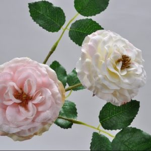 Rozentak creme roze