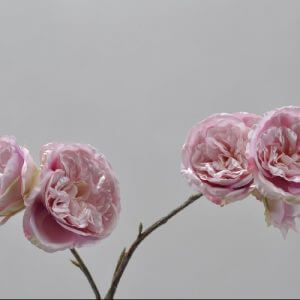 Rozentak roze 47cm