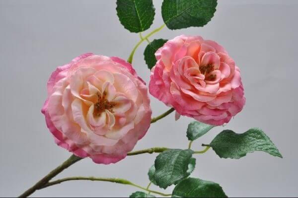 Rozentak roze