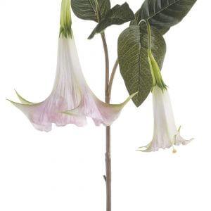 Trompetplant licht roze 95cm
