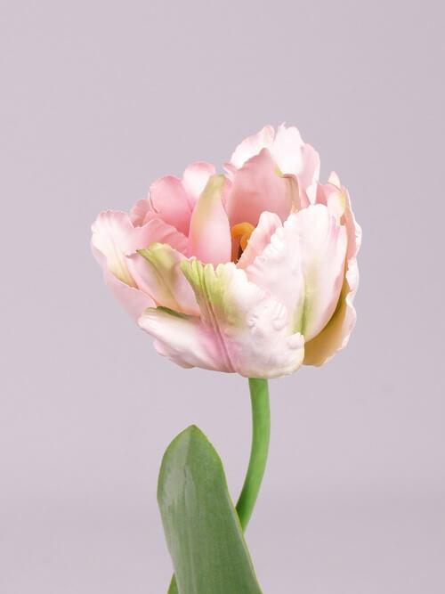 Tulp roze 62cm