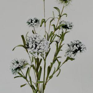 Valeriaan wit 58 cm
