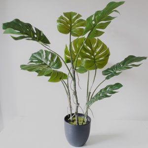 Vingerplant 80 cm