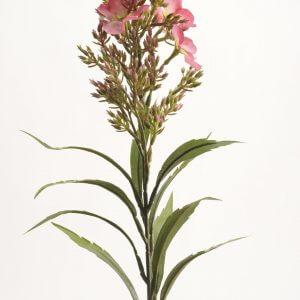Vlambloem roze 60cm