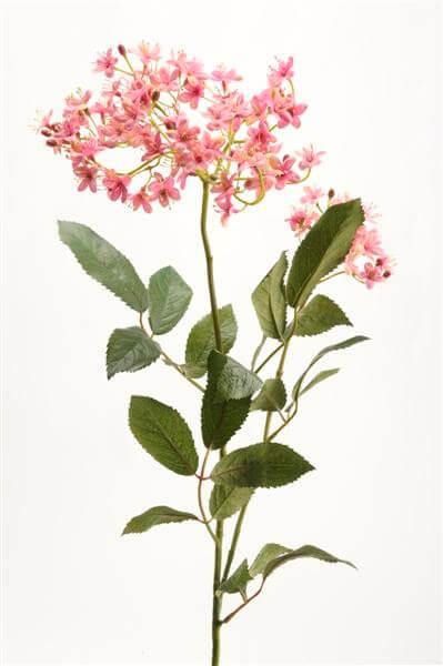 Vlierbloesem roze 70cm