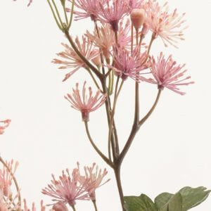 Weide Roze 70cm