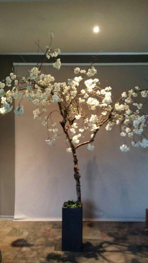 Witte bloesemboom