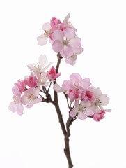 bloesemtak 36 cm roze-donkerroze