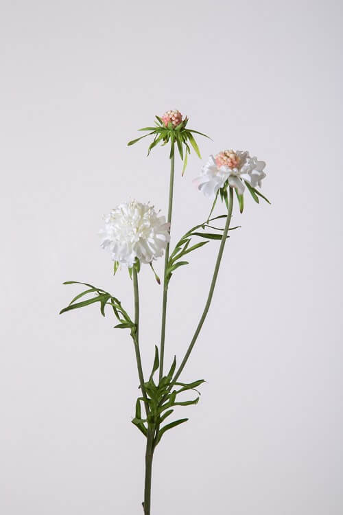 scabiosa sray wit 57 cm 899